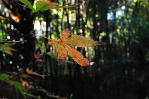 Autumn colours by ladyeowyn1