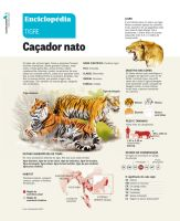 Tigers Infographic by pauloomarcio