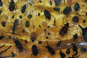 Bug Wall by ReSaturate