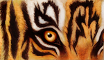 Tiger Eye by Greenticky