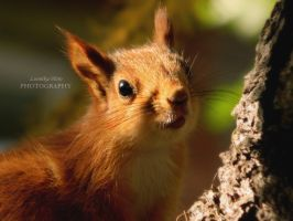 Baby squirrel by Lunnika-Horo