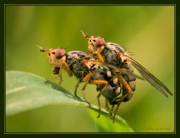 Making Fly. by israelfi