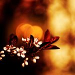 Incandescence by imveryconfused