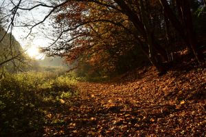 The Way of fallen Leaves by ElConsigliere