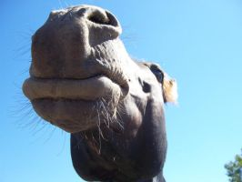OH NOSE A HORSE by BrighterDiscontent