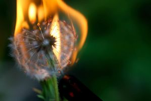 Dandy Fire by Madz4ever