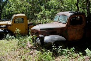 Old Dodge trucks by finhead4ever