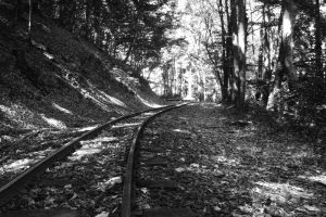 Rails in the woods by NorbertKocsis