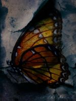 Death of a Butterfly by to-the-brink