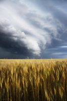 Storm on a Wheat Field by mfunston