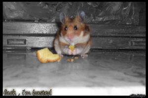 RinoTheHamster busted  - NEOX by DjN3oX