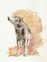 .: wolf waterfull:. by Seppyo