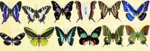 Mac Icons - Butterflies Set 4 by Nastino47