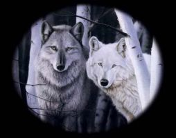 Wolves by Sacero