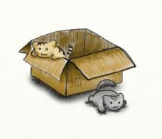 Cats in a box by shadehikari