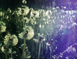 Oxidized dandelions of lights by esire