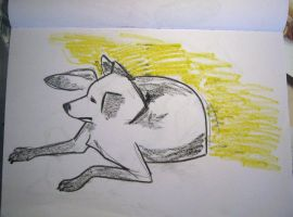 dog in the sun by charlieinabox