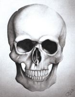 Skull by Nominy13
