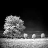 Home Tree infrared by MichiLauke