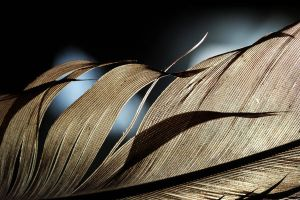 feather in detail by AnjaSchlegelmilch
