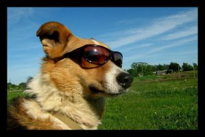 Dog in ze glasses by Nastiona