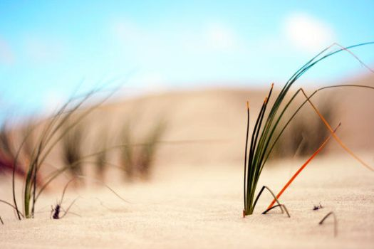 Sand and Grass by MasterFruityLoops