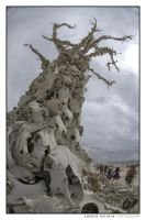 The Bone Tree, Burning Man (2007) by hoshq