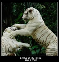 Battle of the tigers by renepokie