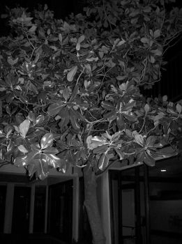 this tree by liebtme