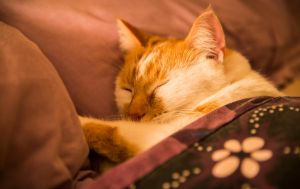 Cat Nap... by WillCook