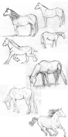 Horses - pratice by AliceSacco