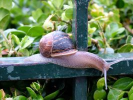 Snail on the run by laughcrylive