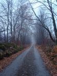 Fall Trail by icemask