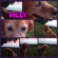 My dog Miley at the Park by emerswell