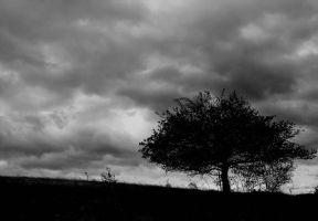 IMG 1023bw by Placi1