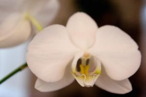 I Love Orchids IV by LDFranklin