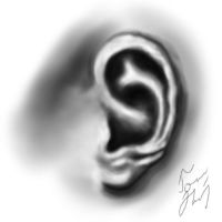 Ear by tomhotovy