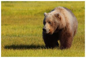 In the Meadow by Nate-Zeman