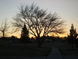 Beautiful Tree and Sunset V2 by Daato-Omata