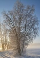 Winter tree by ThereseBorg