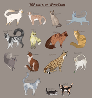 tsf WindClan by Tam-Felines