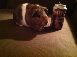 A guinea pig with some Rootbeer on the side! by HellishNightmare