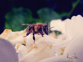 Honey Bee. by LizAlasca