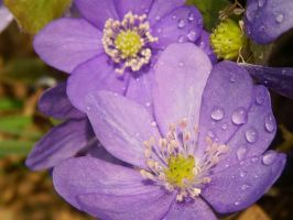 Purple Rain by Fliu