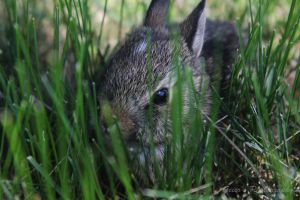 Little Thumper by silverlakephotos