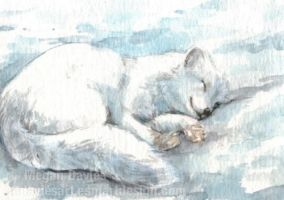 Sleepy Arctic Fox ACEO by Pannya