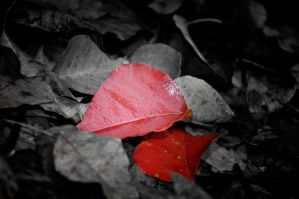 The Red Leaf by tinfire