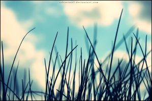 Grass and the Sky by Schinizzel