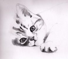 Little cat by luq-87