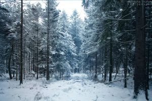 Winterdream by AljoschaThielen